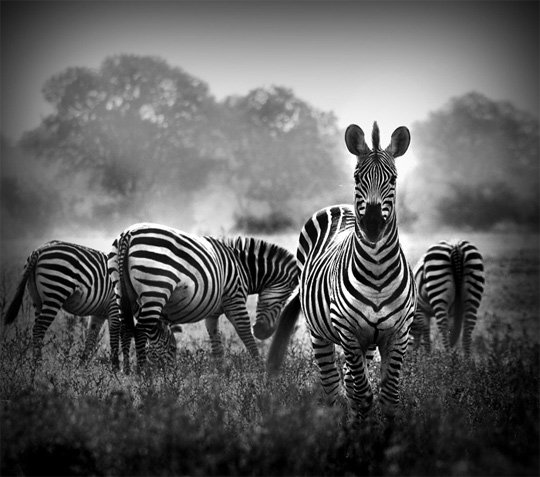 Beautiful Black and White Nature Photography