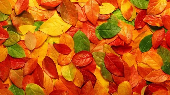 14 Colorful Autumn Wallpapers